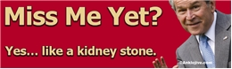 Miss Me Yet? Yes... Like a Kidney Stone - Liberal Progressive Laptop/Window/Bumper Sticker